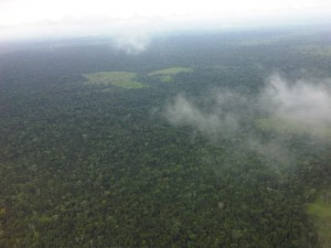 Aerial view of deforested patch
