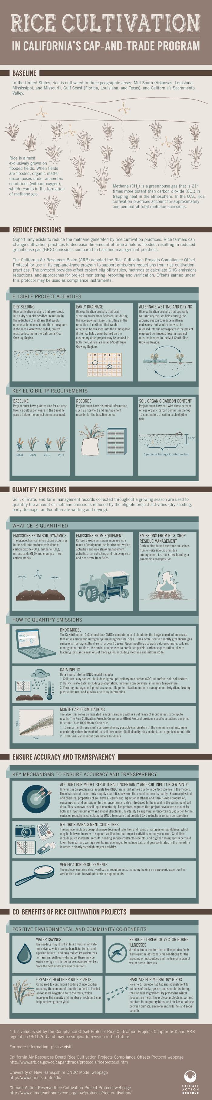 infographic-rice7