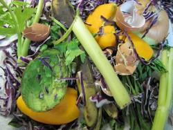 IMG_2372 composting